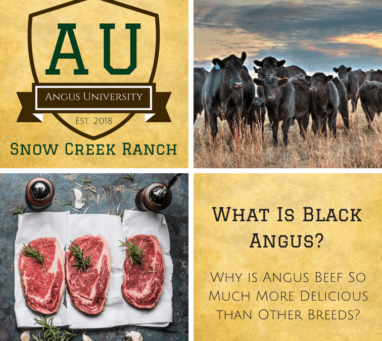 Black Angus Beef, Certified Angus Beef, What Is Angus Beef